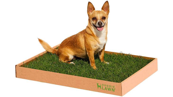 Doggie Lawn