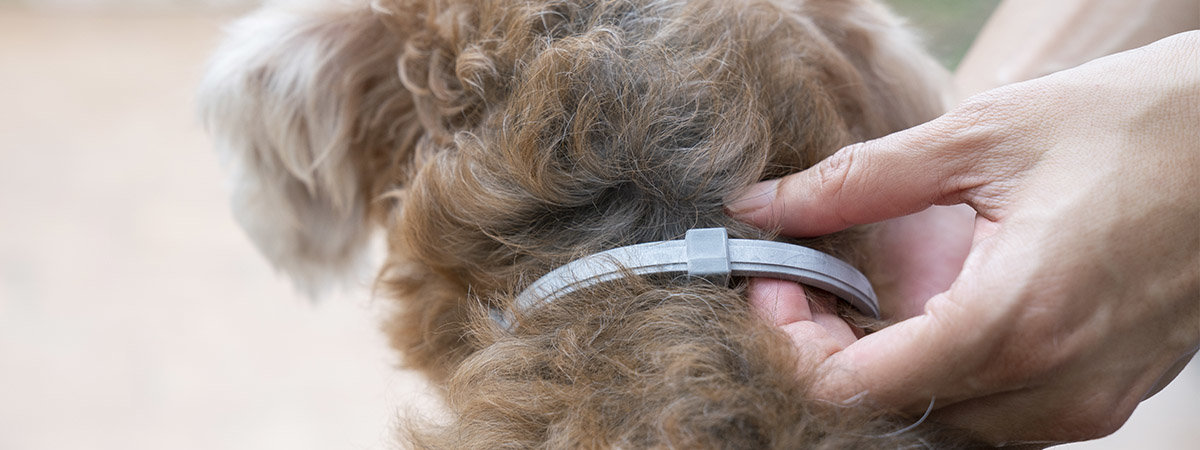 Top 5 Flea and Tick Collars for Dogs